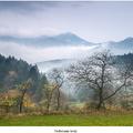 Prelievanie hmly
