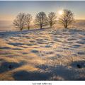 Zamrznuté steblá trávy
