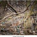 Dokonale zamaskovaný zajac