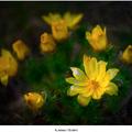 Koruna z kvetov