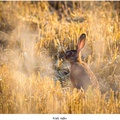 Malý zajko