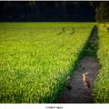 Zvedavé zajace