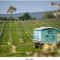 Úkryt vinárov
