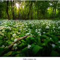 Svetlo v temnom lese