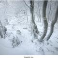 Karpatská zima