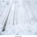 Snehová výchrica