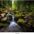 Lesný potok