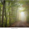 Zahmlená cesta lesom