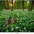 Lužný les