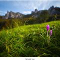 Súľovský kvet