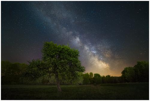 Strom pod hviezdami