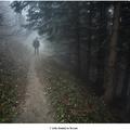 Cesta temným lesom
