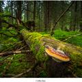Cyklus lesa
