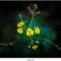 Lesný kvet