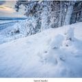 Snehoví trpaslíci