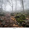 Temný les