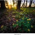 Zlatom posiatý les