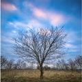 Symetrický strom