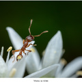 Mravec na výlete