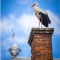 Zvieratá - vtáky/ Wildlife - birds