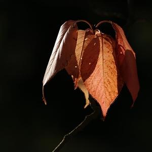 Podzim nás asi neobejde