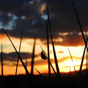 lienka pri západe slnka