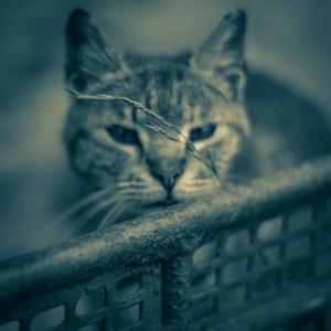 zvedavá mačka