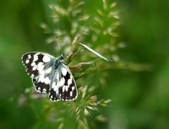 Na motýlích krídlach