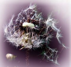 usychá tráva, vedne kvet