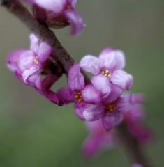 Jar v lese