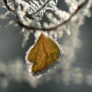 Stratený šperk ľadovej kráľovnej