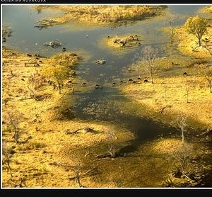 Delta řeky Okawango