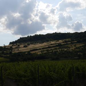 Kopec vo vinohradoch