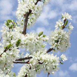 Jarné kvety zas