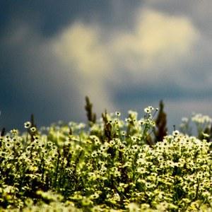 kvety pred búrkou