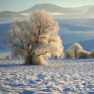 Zimné ráno v Turci