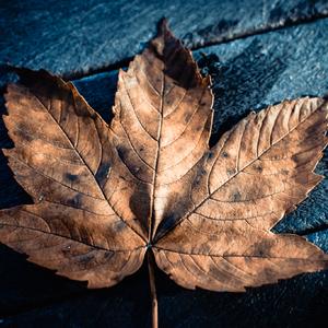Jesenná hnedá