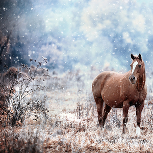 The Magical World Of Horses