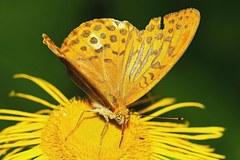 nektarove ranajky