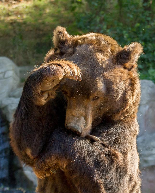 Medvěd Jelizar
