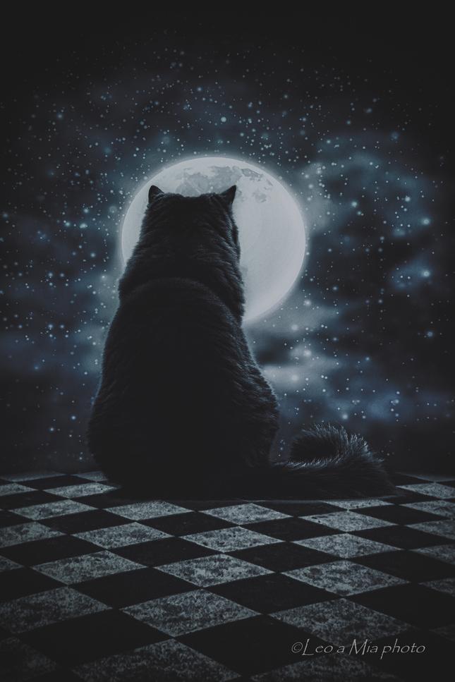 Mačka a mesiac