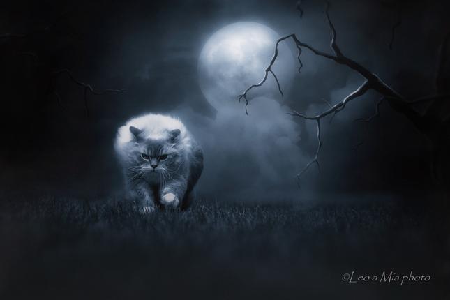 Nočný lovec