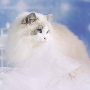 Nežná modrooká kráska