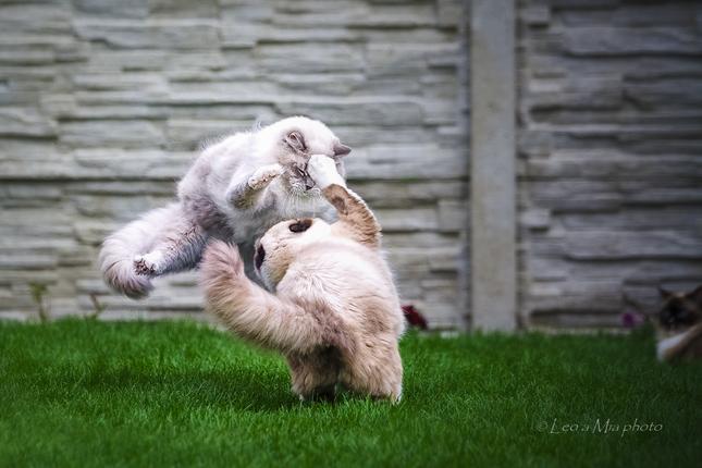 a66d85217 mačacie Kung Fu - Fotografia - Fotogaléria | ePhoto.sk - foto ...
