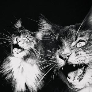 Moje mačky