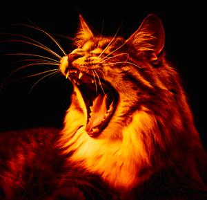 my cat hell
