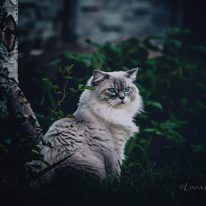 ako v tmavom  lese