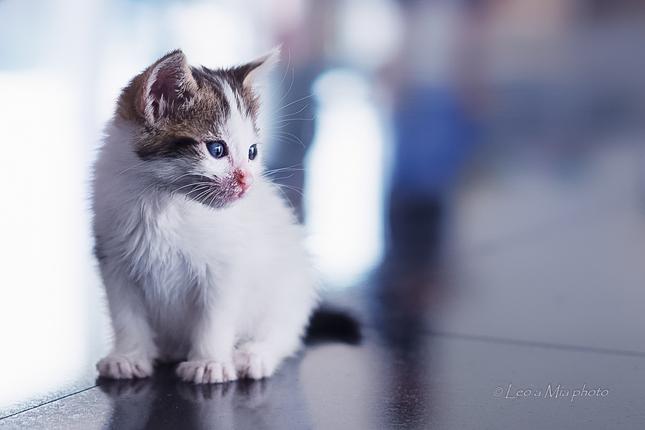 biela mačička zábery