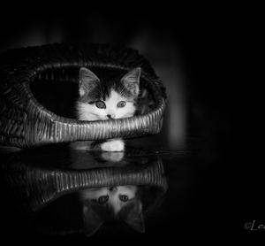 OZ Mačací raj