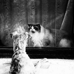 o psíkovi a mačičke